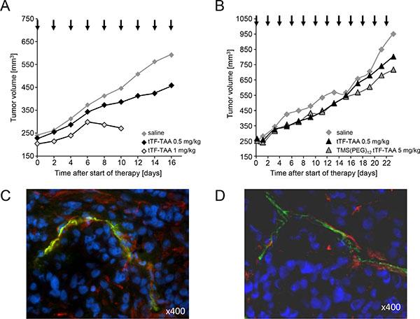 Effect of tTF218-TAA on the growth of human xenotransplants in CD-1 nude mice.