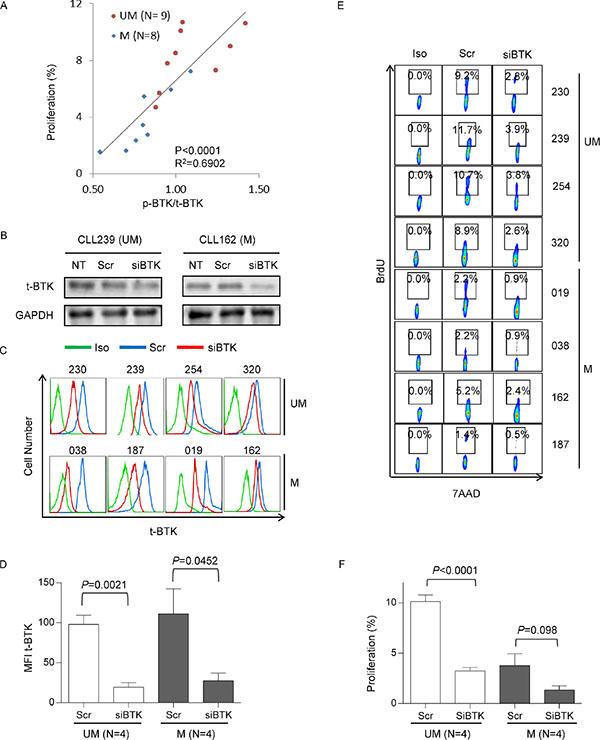 Heightened proliferation in UM-CLL subgroup is BTK-dependent.