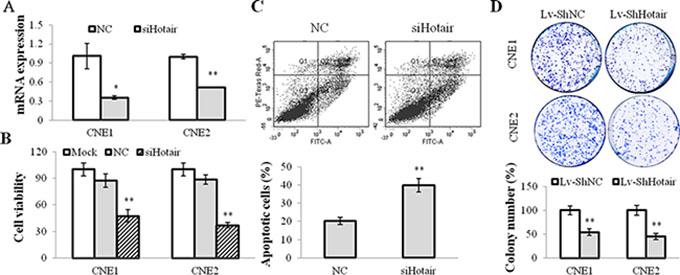 Hotair mediated cell growth in NPC cells.