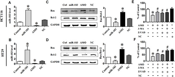 miR-183 regulated cell death in colon cancer cells.