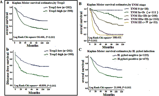 Survival curves for gastric cancer using the Kaplan-Meier method and the log-rank test.