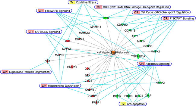 Bioinformatic analyses of differentially-expressed proteins from BEAS-2B cells dosed with Cd.