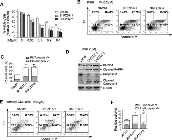 Down-regulation of FZD7 increased apoptosis induced by IM.