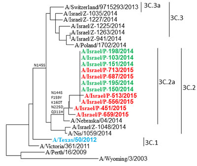 Phylogenetic analysis of influenza A (H3N2) isolated in Israel during the 2014-2015 season.