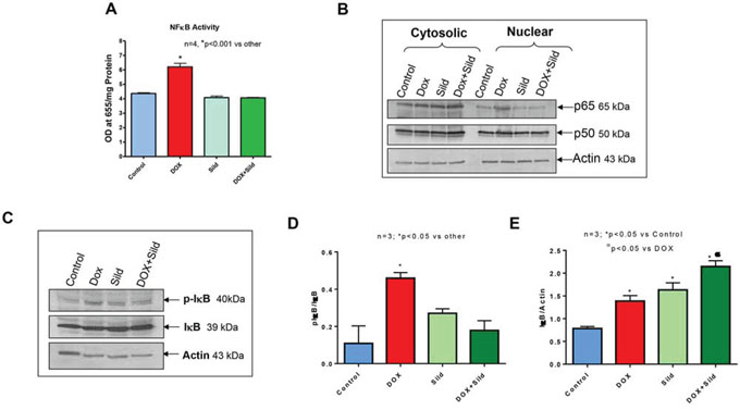 Figure 8. Sildenafil and DOX co-treatment reduces NF-κB activity in DU145 cells.