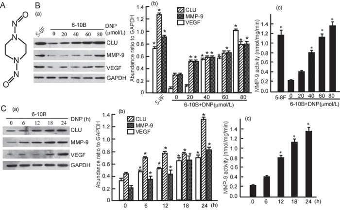 DNP induces expressions of CLU, MMP-9 and VEGF.