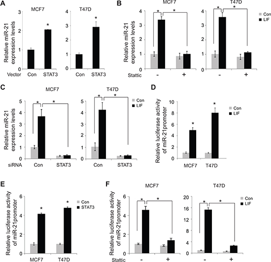 LIF induces miR-21 expression through STAT3.