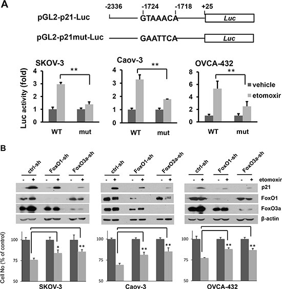 Inhibition of CPT1A induces p21 expression through a FoxO-dependent mechanism.