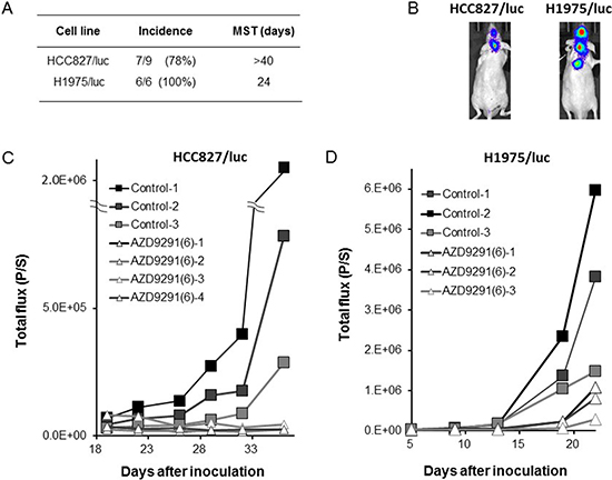 Effect of EGFR-TKI treatment in LMC models with HCC827/luc and H1975/luc cells.