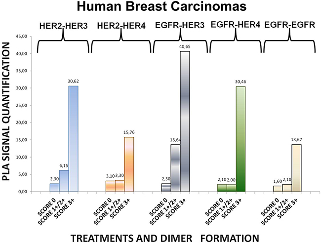 Dimer formation pattern in three groups of human breast cancer tissues based on HER-2 expression profile.