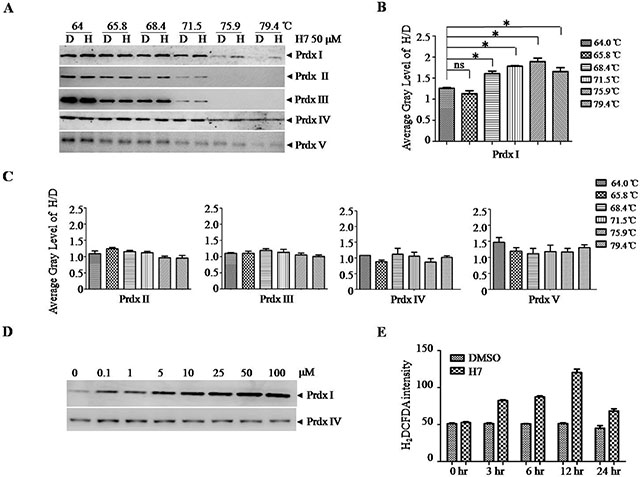H7 interacts with Prdx1 in cells.