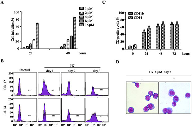 H7 induces partial differentiation of NB4 cells.