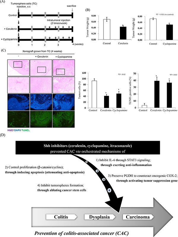 SHH inhibitors significantly inhibit cancer stem cell activation.