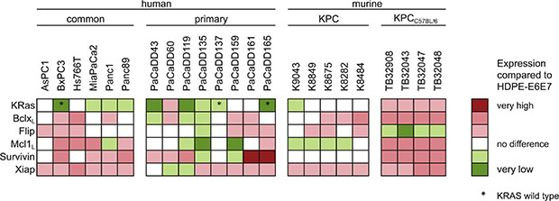 Expression of KRas and apoptosis associated proteins in PDAC cell lines.