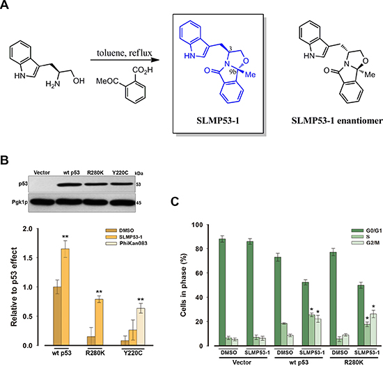 SLMP53-1 activates wt p53 and restores the wt-like activity to mut p53R280K in yeast.