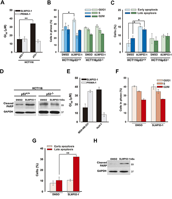 SLMP53-1 growth inhibitory effect in human wt p53- and mut p53R280K-expressing tumor cells is mediated by p53-dependent cell cycle arrest and/or apoptosis.