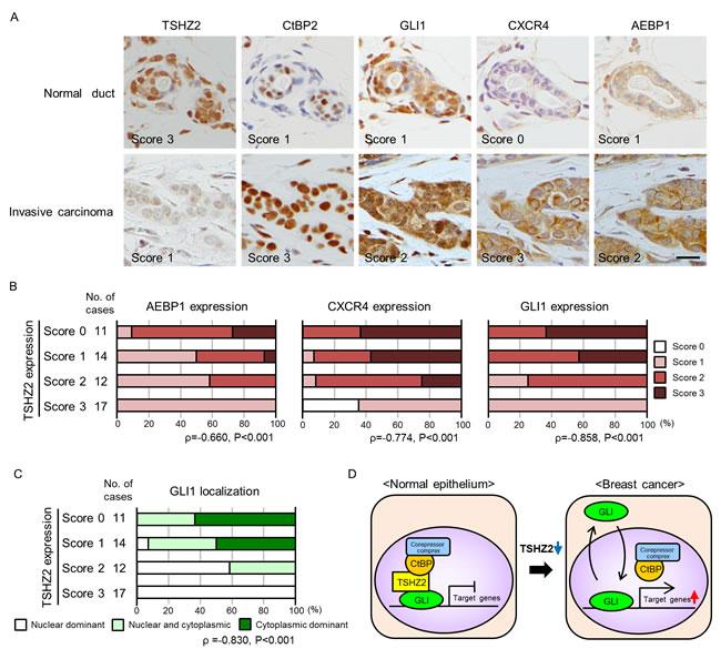 Immunohisctochemical analysis of human mammary glands.