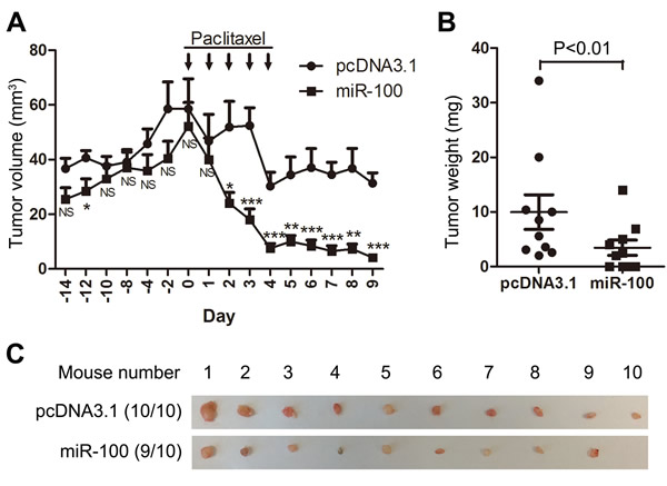 Ectopic expression of miR-100 sensitizes MCF-7 luminal breast cancer to the therapeutic effects of paclitaxel in nude mice.