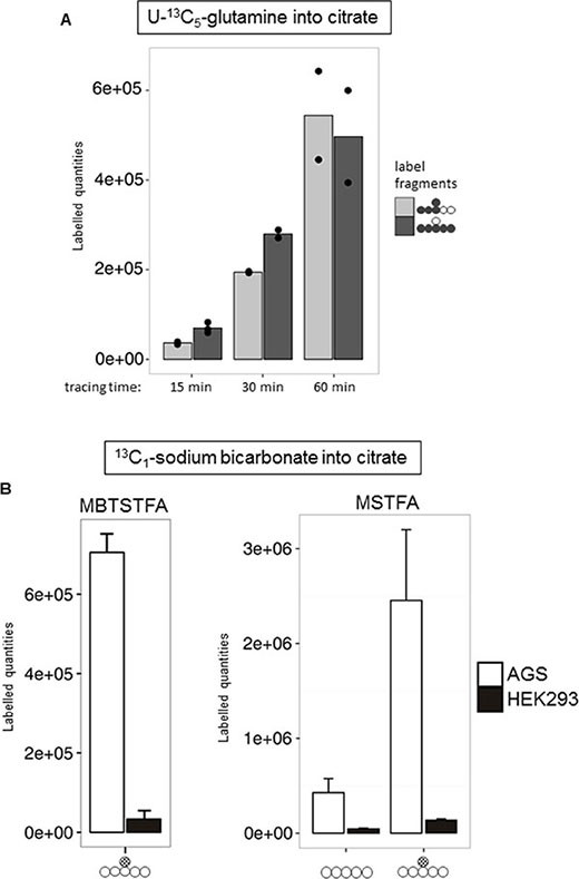 Evidence for reductive TCA metabolism via 13C5-glutamine and 13C1-HCO3 labelling.
