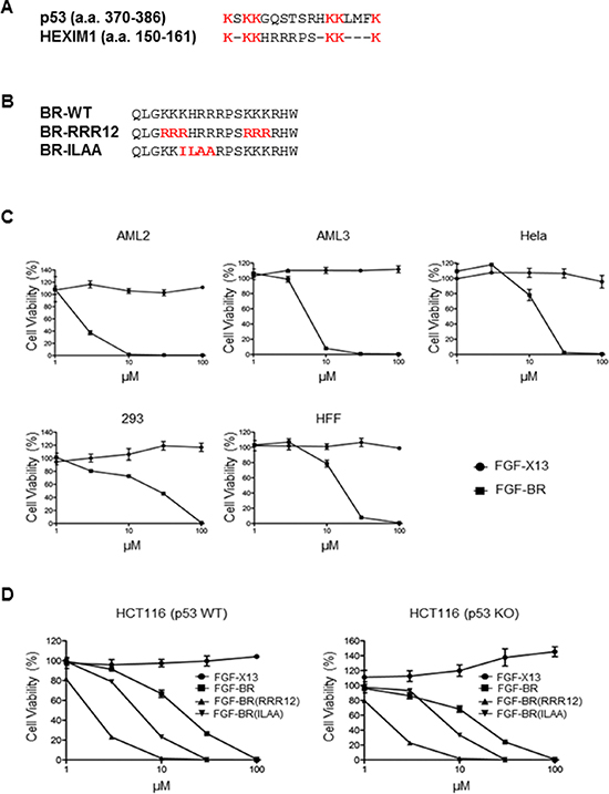 FGF-tagged BR peptide induces cell death.