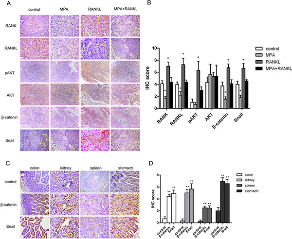 Expression of RANK/RANKL and metastasis-related proteins in mice samples.