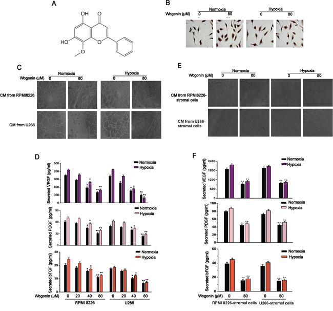 Inhibitory Effects of Wogonin on MM-Stimulated Angiogenesis.