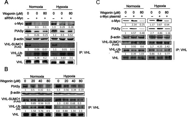 Wogonin Abolished c-Myc-Mediated Regulation of VHL SUMOylation and Ubiquitination.