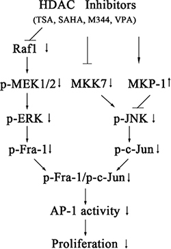 Model for the signaling pathways involved in HDACI-induced suppression of c-Jun/Fra-1-mediated AP-1 activity and proliferation in NB cells.