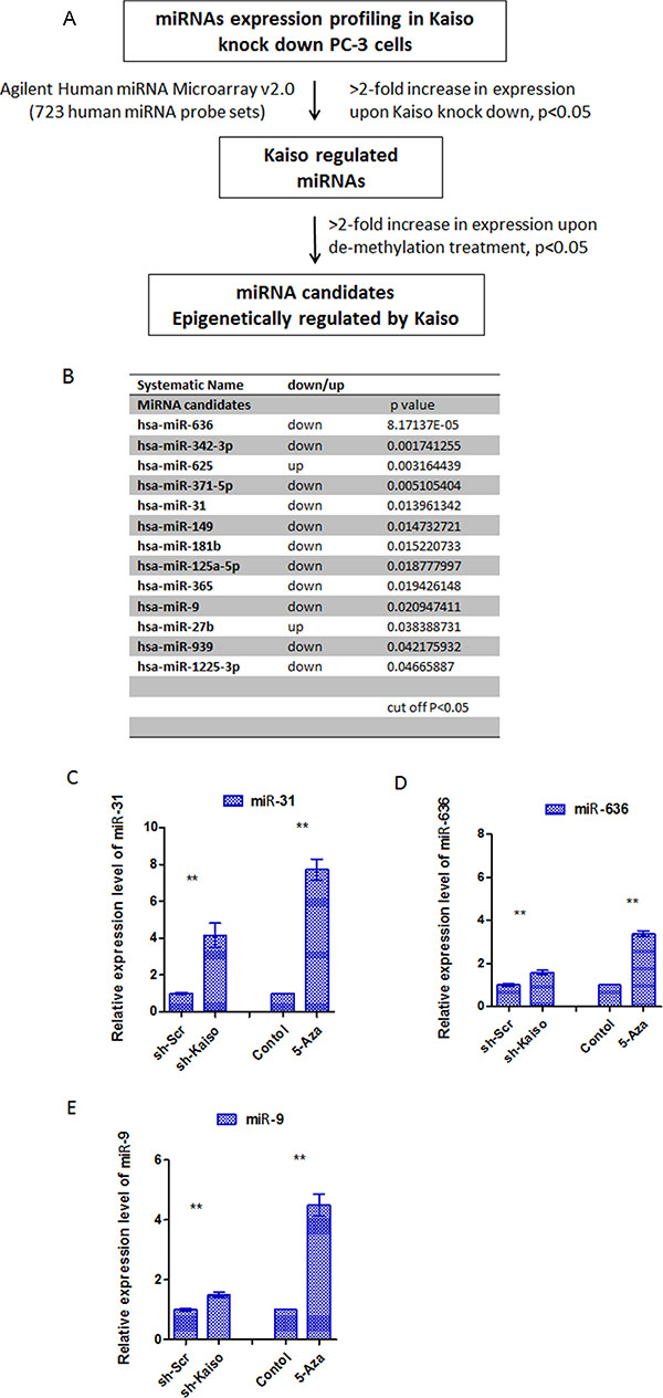 The screening and validation of miRNAs epigenetically regulated by Kaiso.