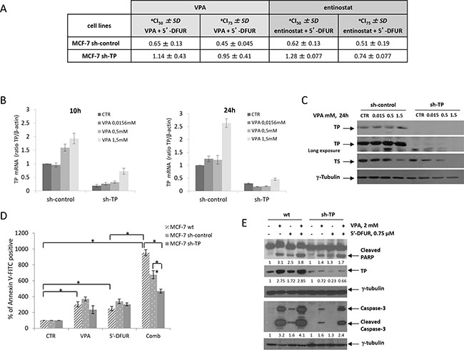 TP protein plays a critical role in the synergistic antiproliferative and pro-apoptotic effect induced by the combination of VPA and 5′-DFUR.