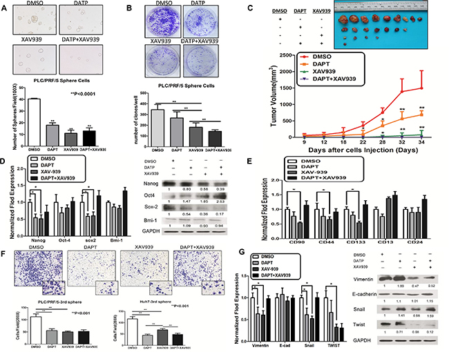 Notch and Wnt/β-catenin signaling pathways promoted stem-ness characteristics and metastasis potential in sphere-forming liver cancer stem cells.