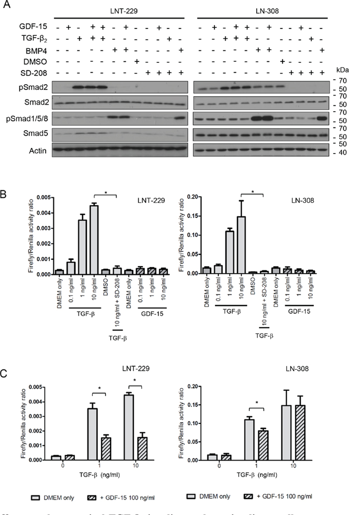 GDF-15 effects on the canonical TGF-β signaling pathway in glioma cells.