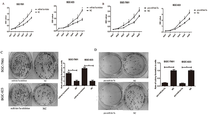 miR-let-7a inhibited the proliferation of the GC cells SGC-7901 and BGC-823 in vitro.