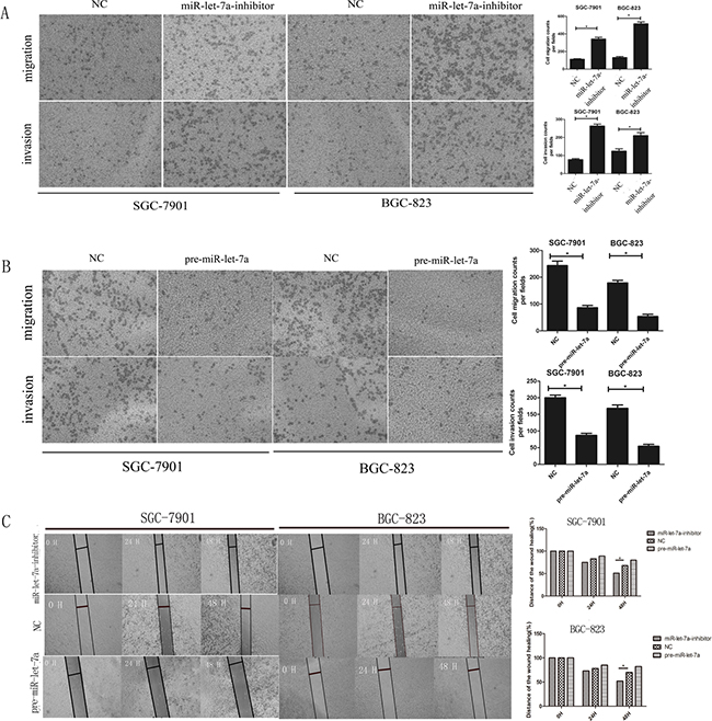 miR-let-7a negatively regulated the migration and invasion ability of SGC-7901 and BGC-823 in vitro.