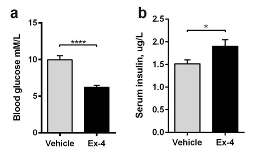 Ex-4 reduces hyperglycaemia and increases insulin secretion in GK rats.