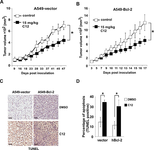 C12 inhibits tumor growth independent of Bcl-2.