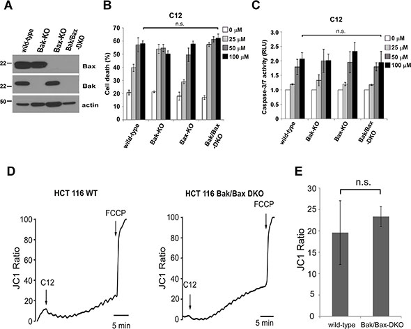 C12-induced tumor cell apoptosis is independent of Bak and Bax.