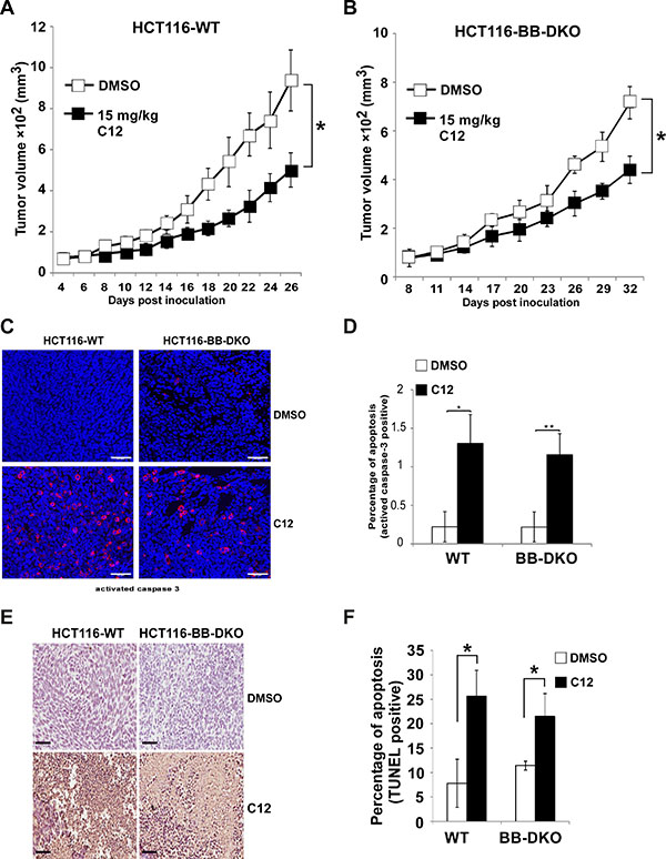 C12 inhibits xenografted tumor growth independent of Bak and Bax.