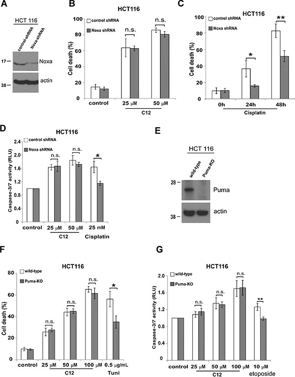 C12-induced tumor cell apoptosis is independent of BH-3 only proteins Noxa and Puma.