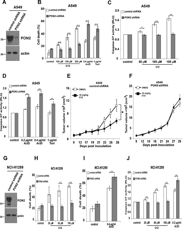 PON2 is required in C12's cytotoxicity on tumor cells and inhibitory effects on tumor growth.