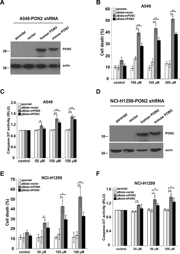 PON3 sensitizes tumor cells with reduced PON2 expression to C12.