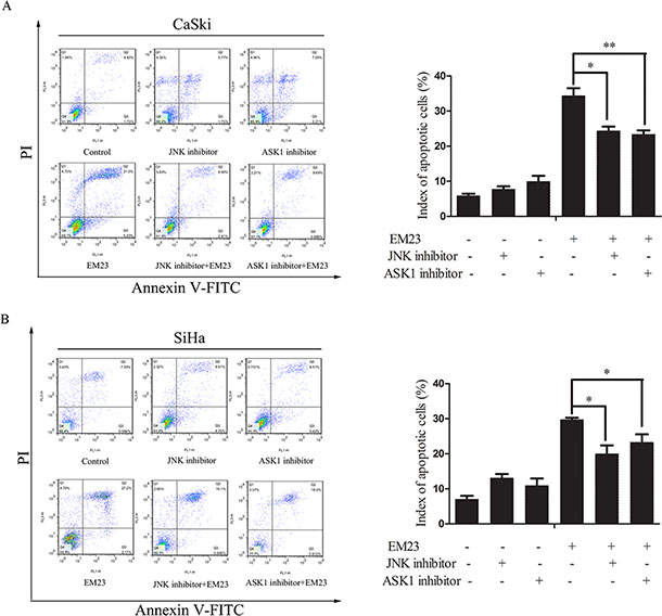 Effects of ASK1 and JNK inhibitor on EM23-induced apoptosis.