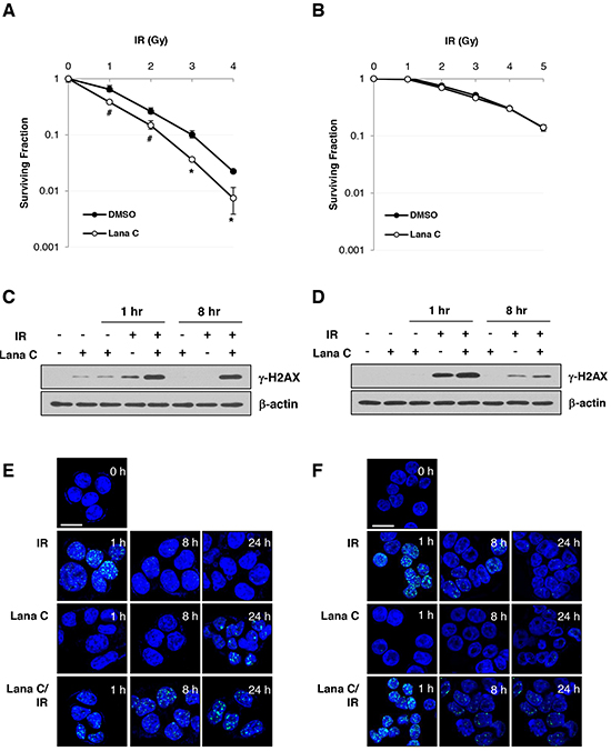 Lanatoside C sensitized HCT116 cell to radiation via suppression of DNA damage repair.