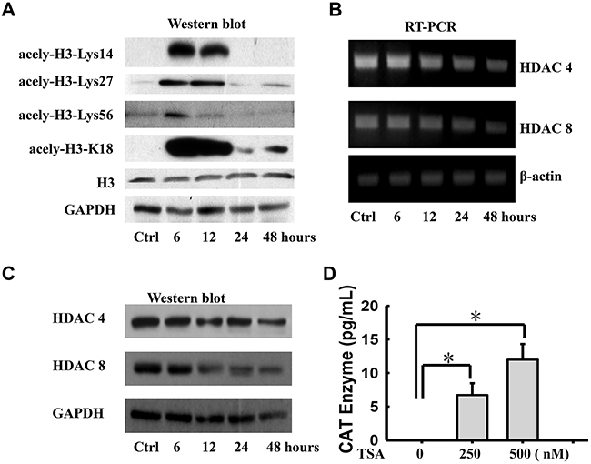 Histone deacetylase inhibitor transcriptionally induces expression of TSP-1 in WERI-Rb1 cells.