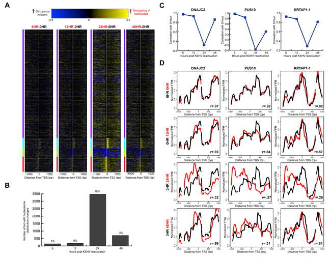 Widespread, transient translational nucleosome repositioning following KSHV reactivation.