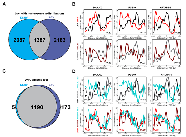 Nucleosome redistributions driven by sophisticated DNA-encoded nucleosome position information are consistent across disparate cell types.