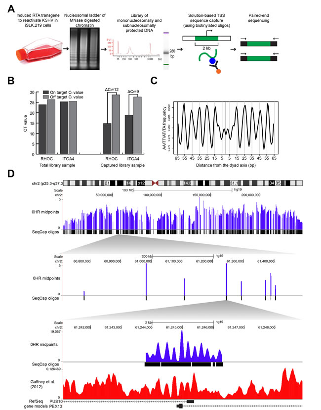 Mapping nucleosome distributions following KSHV reactivation using mTSS-seq technique and mTSS-seq validation.