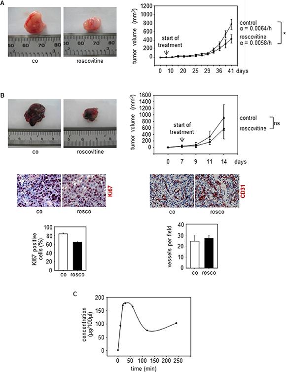 Cdk5 inhibition reduces tumor growth.