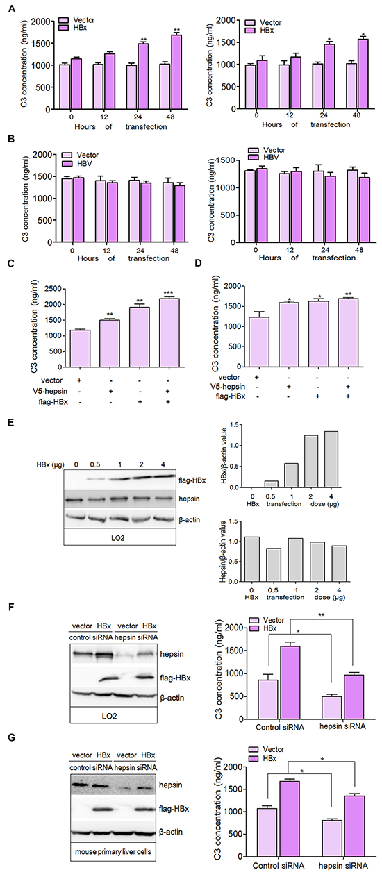 HBx binding to hepsin induces C3 production in human hepatocytes.