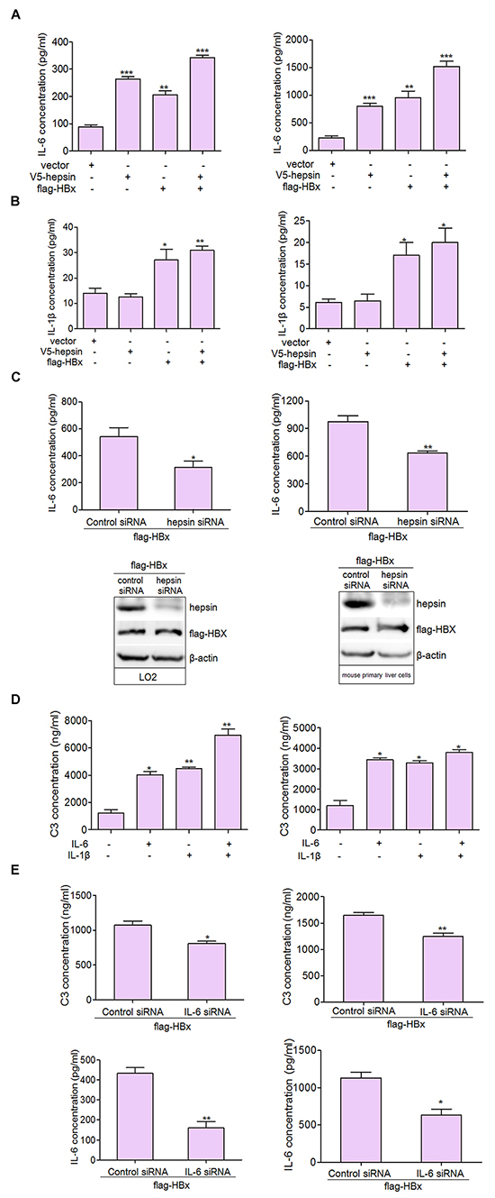 IL-6 is the major activator of C3 production in hepatocytes.